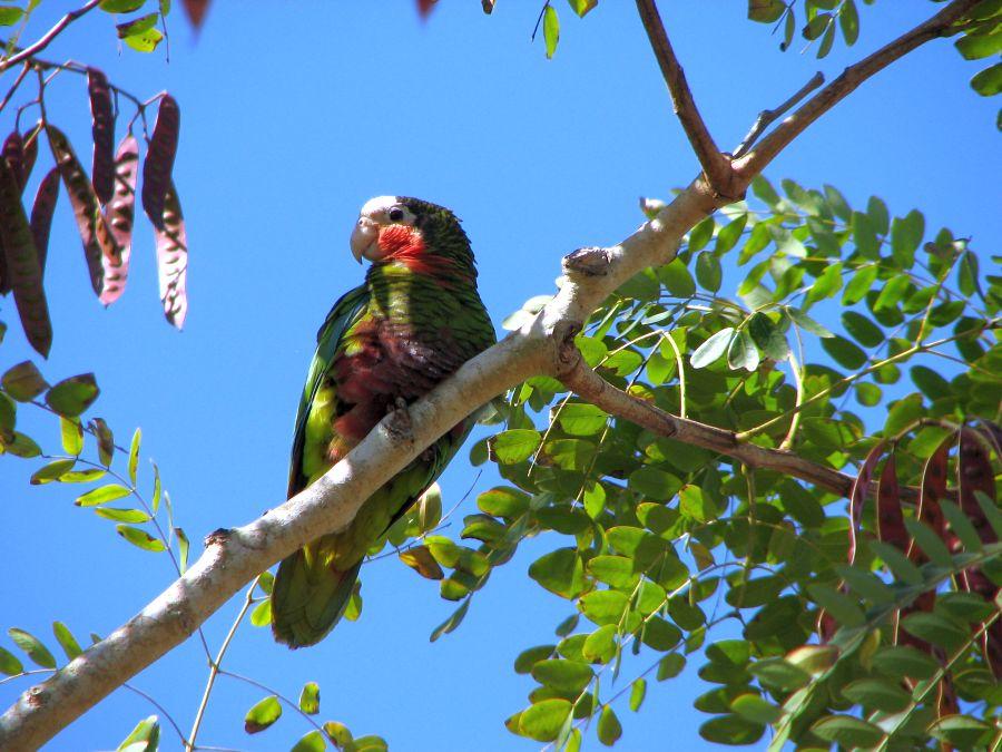 sancti spiritus, fauna, animales, animales endemicos