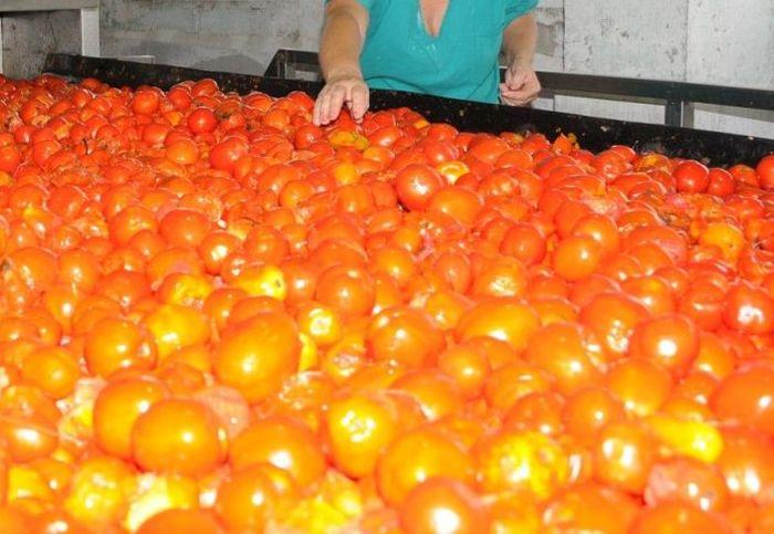 tomate, sustitución de importaciones, industria, alimentaria, Sancti Spíritus, Cuba