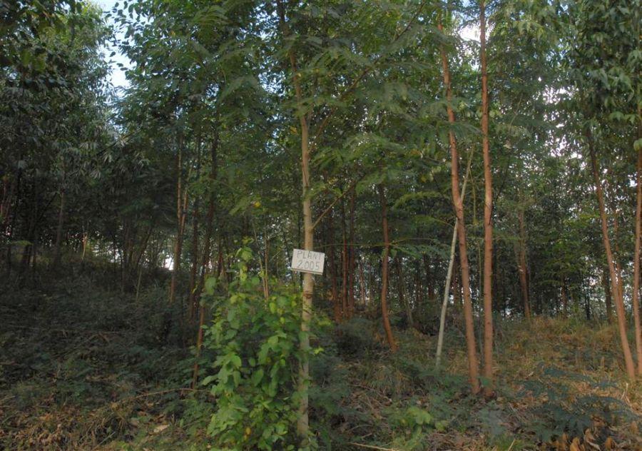 Forestal, silvicultura, Sancti Spíritus