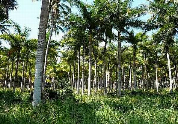 Jardín Botánico, palmeras, hallazgo