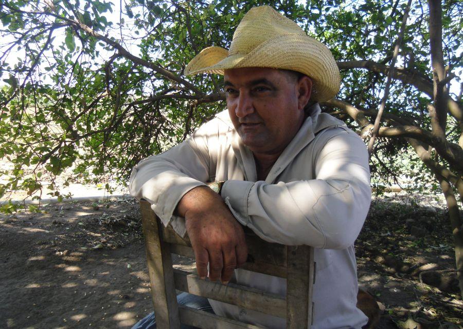 sancti spiritus, banao, cultivos varios, cebolla