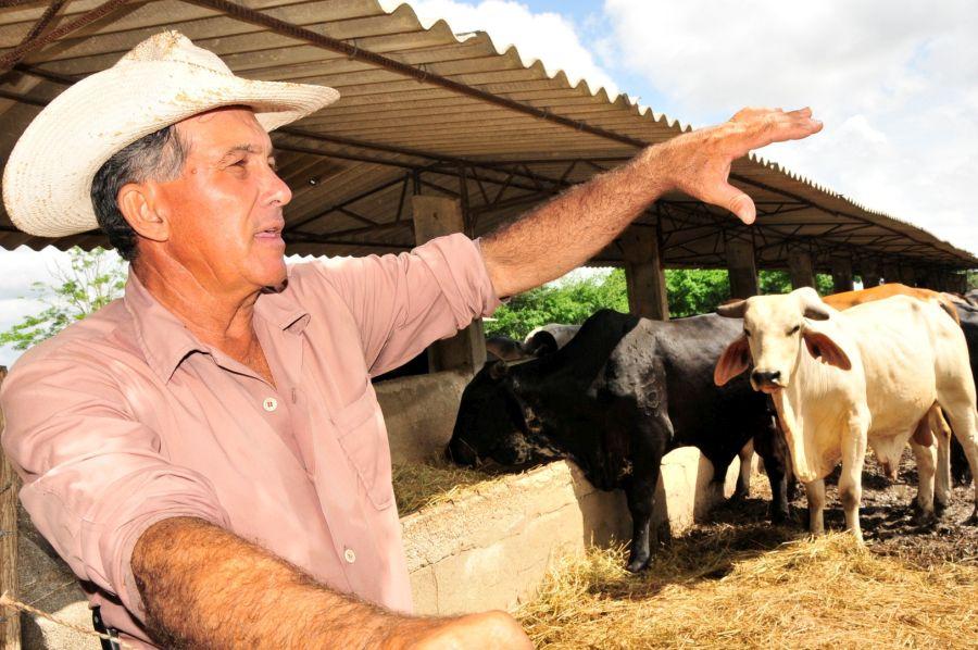 sancti spiritus, la sierpe, 26 de julio, ganaderia, agricultura, arrocera sur del jibaro