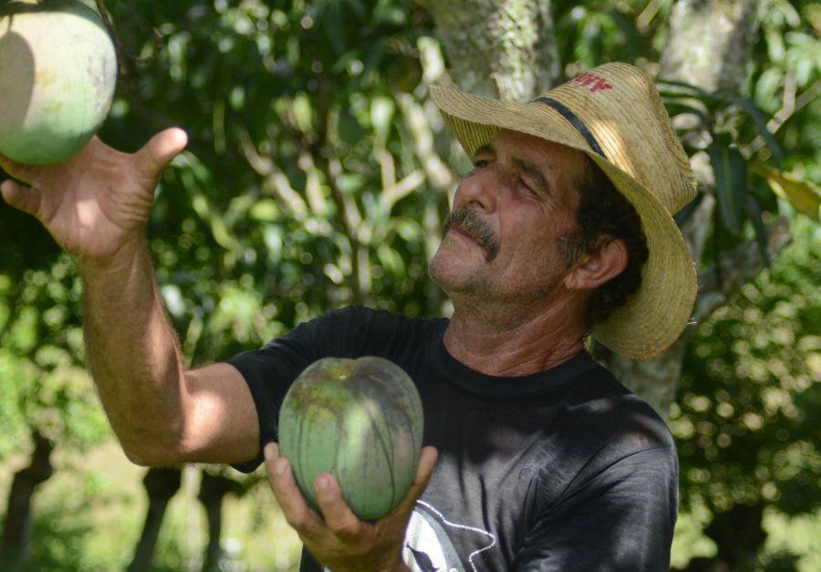sancti spiritus, taguasco, frutas, ganaderia, ccs