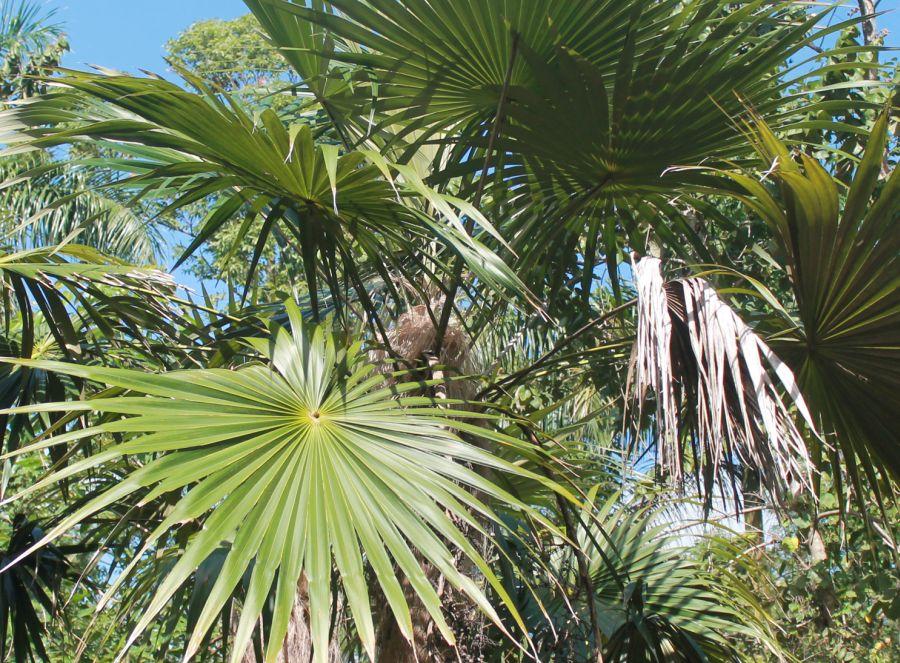 sancti spiritus, medio ambiente, flora, alturas de banao, topes de collantes