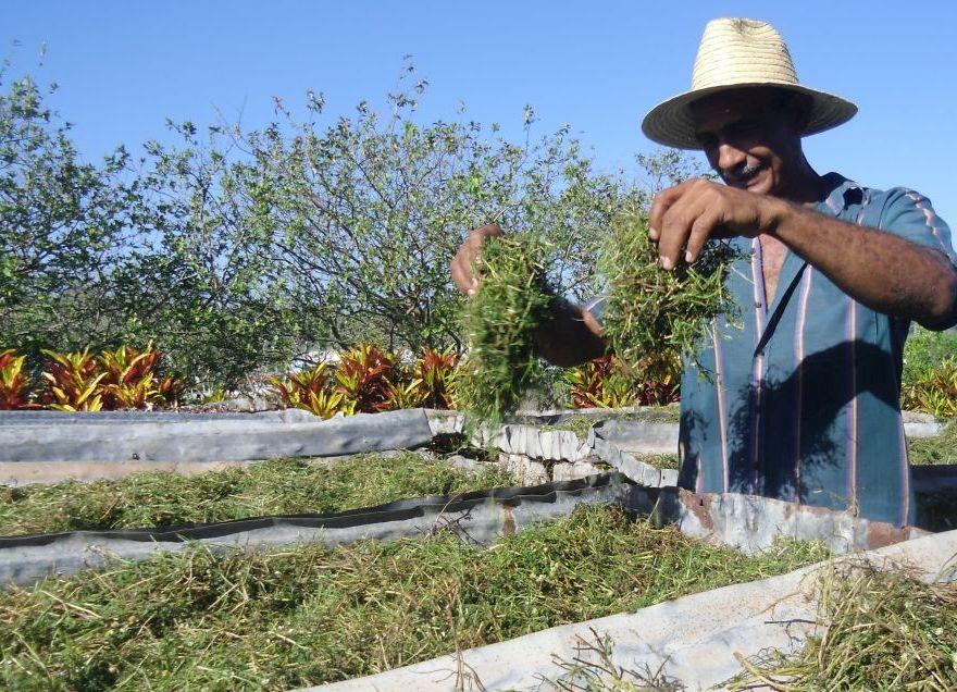 sancti spiritus, plantas medicinales, medicina tradicional, fomento
