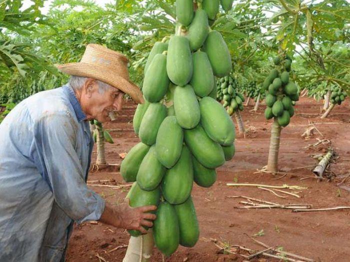 cuba, entrega de tierras en usufructo, agricultura, minag