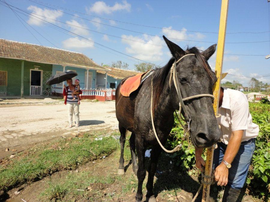 sancti spiritus, huracan irma, jarahueca, yaguajay, agricultura