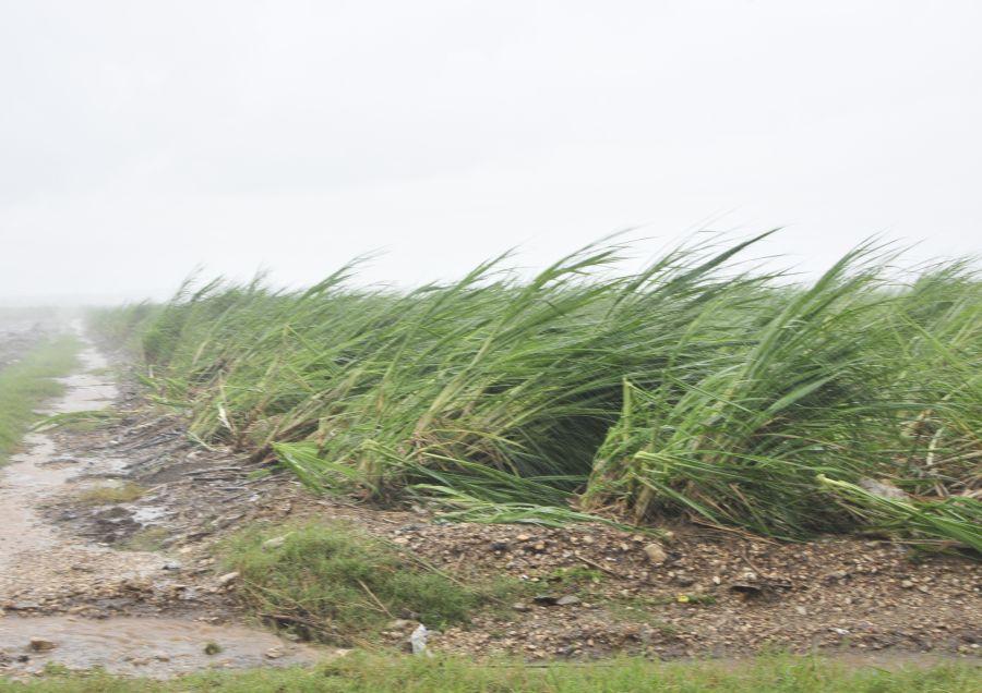 huracan irma, agricultura cañera, intensas lluvias, defensa civil, yaguajay, sancti spiritus