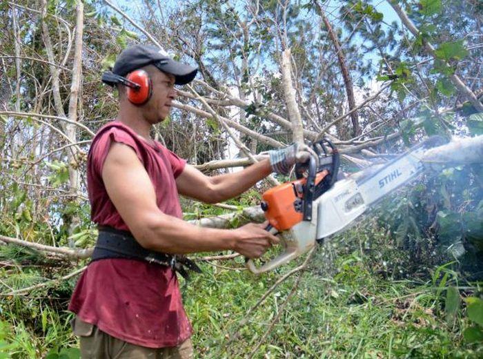 café, Sancti Spíritus, huracán Irma, recuperación