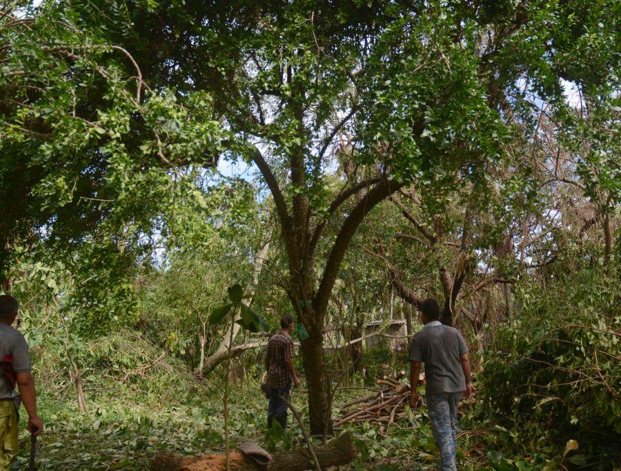sancti spiritus, huracan irma, jardin botanico, medio ambiente