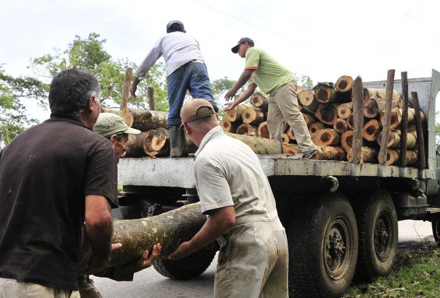 sancti spiritus, huracan irma, vivienda, forestal, madera, yaguajay