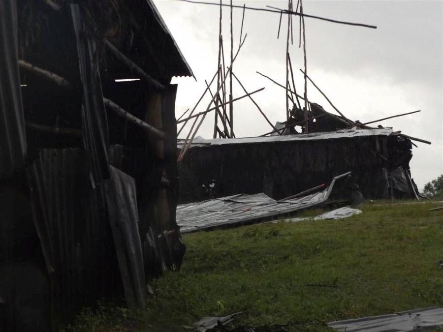 seguro, tabaco, huracán Irma, recuepración