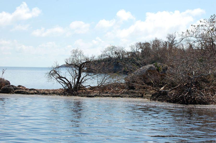 sancti spiritus, parque nacional caguanes, huracan irma, flora, fauna, manglaes, recuperacion, yaguajay