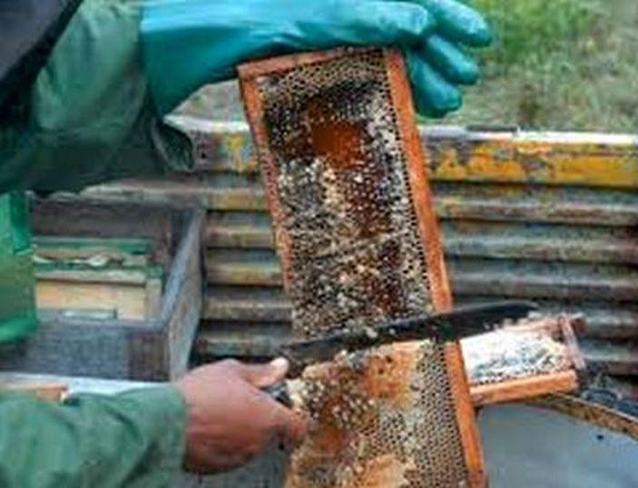 sancti spiritus, miel de abeja, produccion de miel