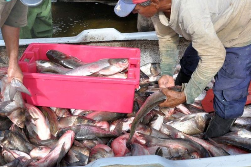 sancti spiritus, pesca, pescado, presa zaza, pescaspir