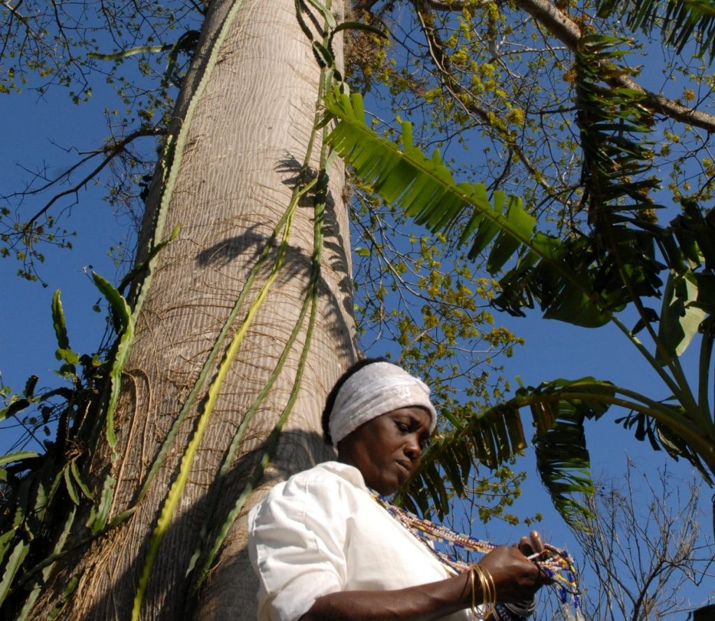 ceiba, árbol, naturaleza, religión, Cuba