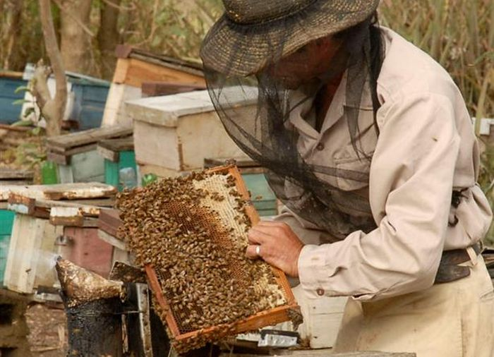 sancti spiritus, miel, produccion de miel de abeja, apicultura