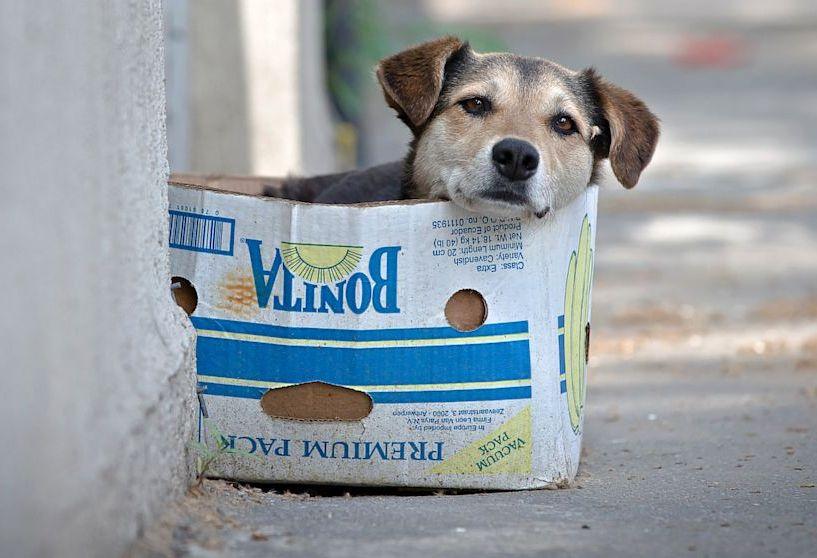 perros, defensa de los animales