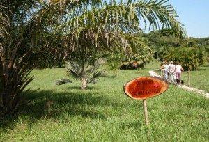 palmeras, Jardín Botánico, Sancti Spíritus