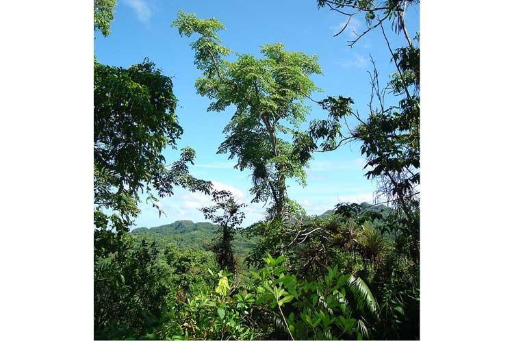 medio ambiente, Topes de Collantes, flora, Sancti Spíritus