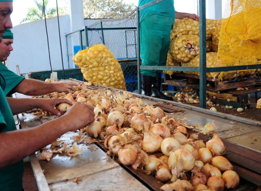 sancti spiritus, fabrica de conservas, cebolla, pasta de cebolla