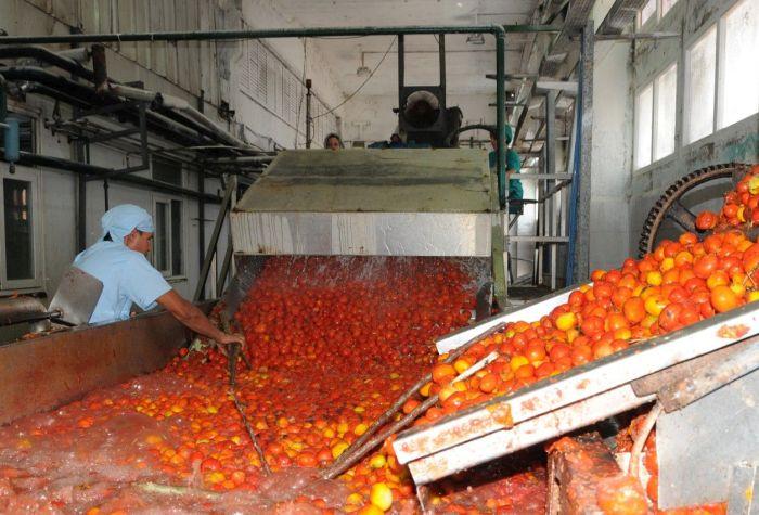 tomate, conservas, Sancti Spíritus