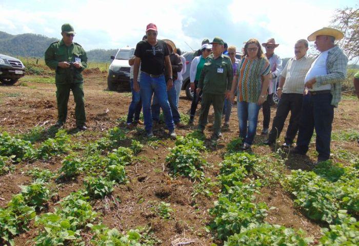 yaguajay, petrocasas, huracan irma, construccion de viviendas, ramon pardo guerra, estado mayor nacional de la defensa civil,produccion agricola