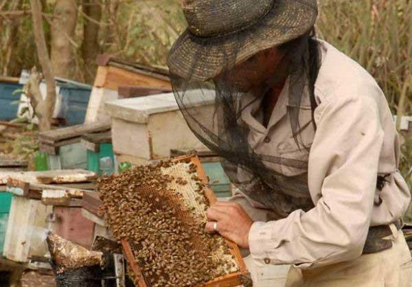 sancti spiritus, apicultura, produccion de miel de abeja