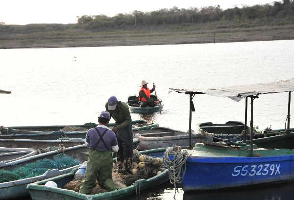 pesca, acuicultura, presa Zaza