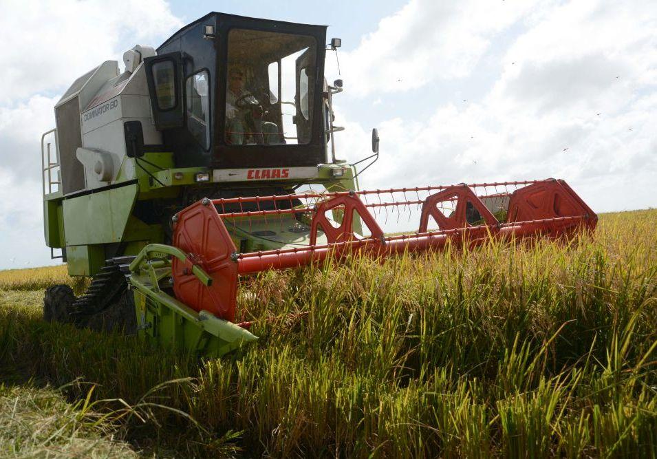 arroz, Sur del Jíbaro, Sancti Spíritus