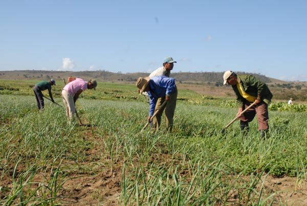 campesinos, sancti spiritus, agricultura