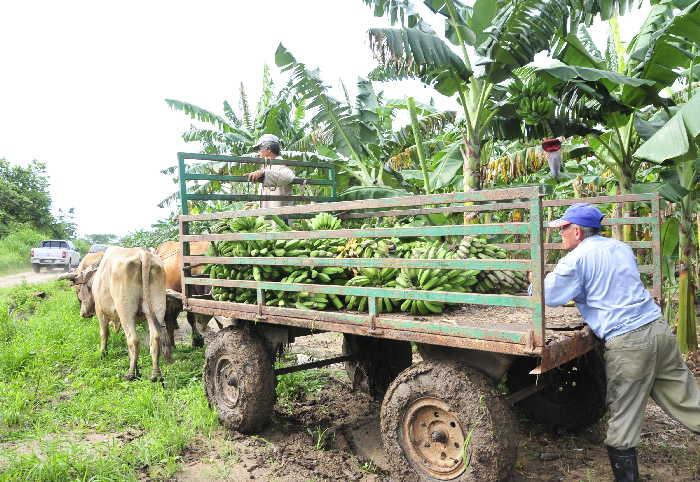 sancti spiritus, intensas lluvias en sancti spiritus, agricultura, produccion de alimentos