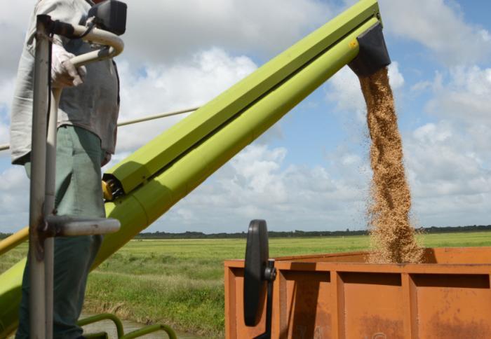 sancti spiritus, arrocera sur del jibaro, empresa agroindustrial de granos, semillas
