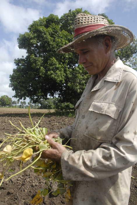 sancti spiritus, agricultura, cultivos varios, produccion de alimentos, autoabastecimiento