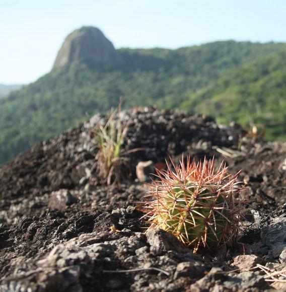 Piedra Gorda, senderismo, Flora y Fauna, Sancti Spíritus