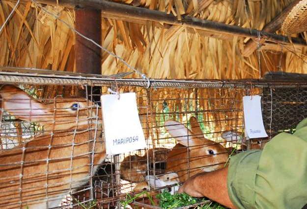 sancti spiritus, yaguajay, cambio climatico, produccion de alimentos, desarrollo local
