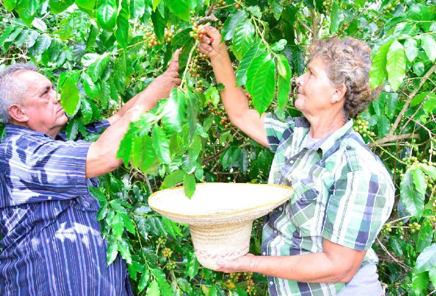 sancti spiritus, agricultura, cabaiguan, guayos, cafe, tabaco, ganaderia