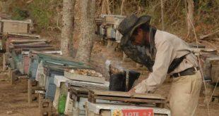 sancti spiritus, miel cologica, produccion de miel, trinidad