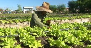 Agricultura urbana, Sancti Spíritus