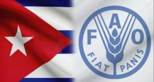 FAO, Cuba, hambre, seguridad alimentaria