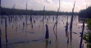 Sancti spiritus, parque nacional zaguanes, tarea vida, medio ambiente, citma, cuenca rio zaza