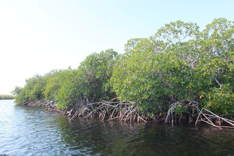 Sancti spiritus, parque nacional zaguanes, tarea vida, medio ambiente, citma, cuenca rio zaza, cambio climatico