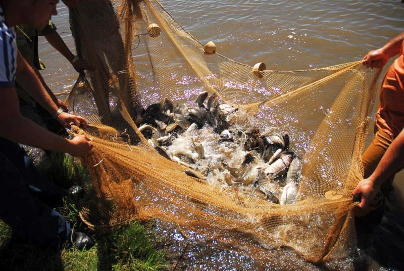 sancti spiritus, presas, acuicultura, pescaspir
