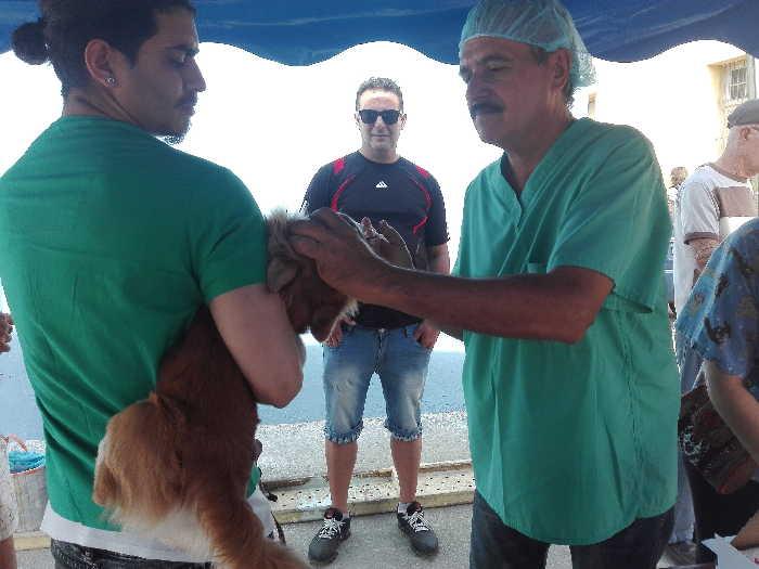 Trinidad, ciudades patrimoniales, animales, medicina veterinaria, ong, canada