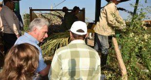 cuba, ministerio de la agricultura, agricultura, miguel diaz-canel, produccion de alimentos, presidente de cuba