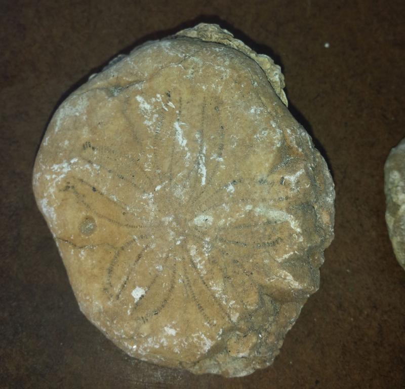 sancti spiritus, domo zaza, museo de la naturaleza y el hombre, erizos