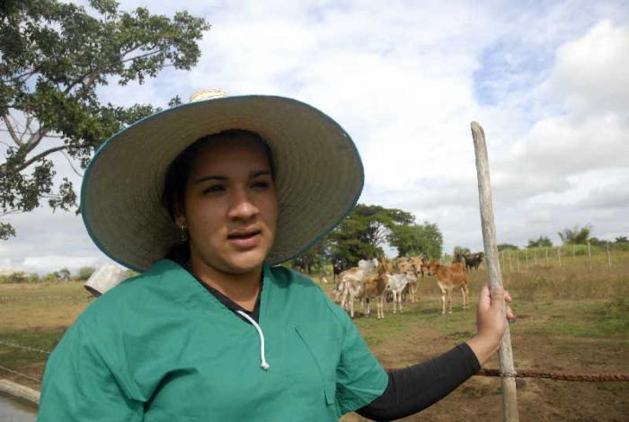 sancti spiritus, ganaderia, inseminacion artificial, mujeres, veterinaria, guasimal