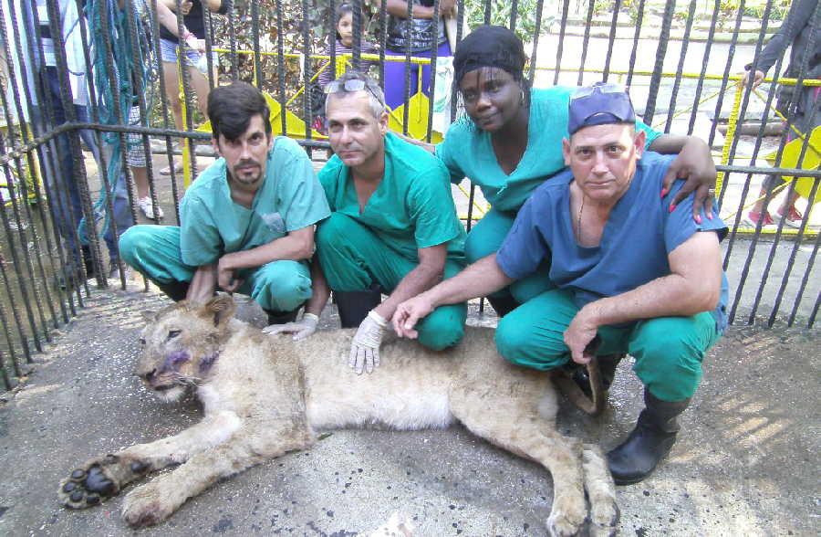 sancti spiritus, zoologico, el bosque, medicina veterinaria