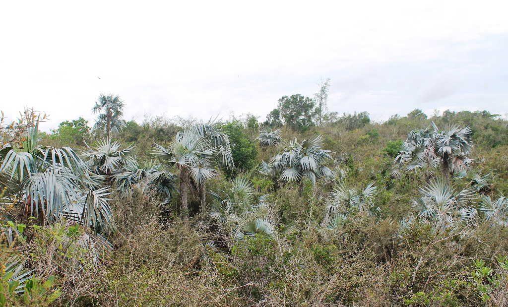 sancti spiritus, sociedad cubana de botanica, jardin botanico, flora