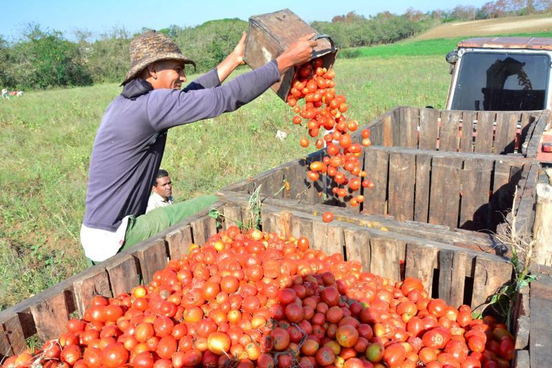 sancti spiritus, produccion de alimentos, agricultura, acopio, comercializacion